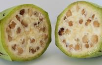 7 iulie 2017: Cercetătorii australieni au anunțat că au creat o banană modificată genetic