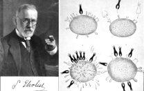 31 august 1909: Prima chemoterapie testată cu succes