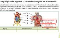 Hotnews: În noul manual de biologie, inima și ficatul sunt poziționate greșit în corp