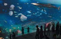 21 mai 1853: Se deschide în Londra primul acvariu public din lume