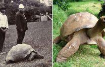 Țestoasa Jonathan, cel mai în vârstă animal terestru, împlinește 188 de ani