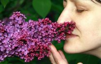 De ce cauzează COVID-19 pierderea mirosului-opinia specialiștilor în medicină de la Harvard